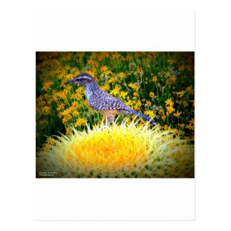 Kaktus-Zaunkönig Postkarte