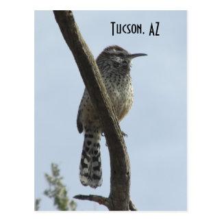 Kaktus-Zaunkönig Tucson Arizona Postkarte