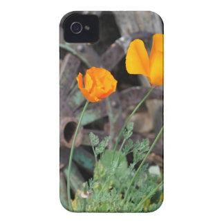 Kalifornien-Mohnblumen Case-Mate iPhone 4 Hüllen