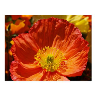 Kalifornien-Mohnblumen Postkarte