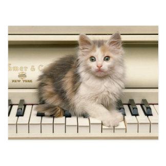 Kaliko-Kätzchen auf einem weißen Klavier Postkarten