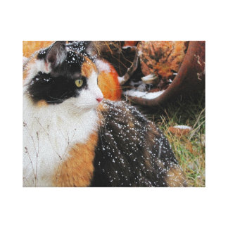 Kaliko-Katze im Schnee durch djoneill Leinwanddruck