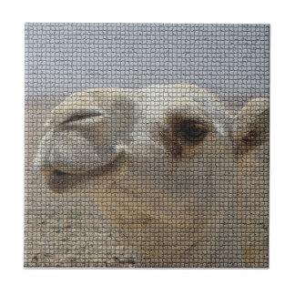Kamel-Hauptfliese Kleine Quadratische Fliese