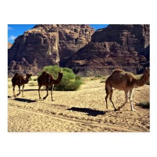 Kamele in der Wüste des Wadi-Rums, Jordanien-Wüste Postkarte