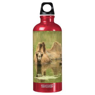 Kamele Yum Wasserflaschen