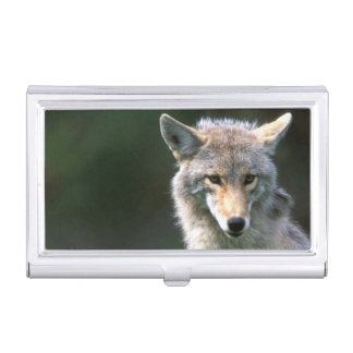 Kanada, Britisch-Columbia, Kojote (Canis latrans) Visitenkarten Dose