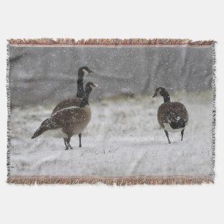 Kanada-Gänse im Schnee Decke