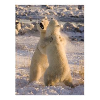 Kanada, Manitoba, Hudson Bay, Churchill. 2 Postkarte