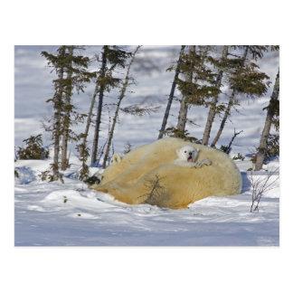 Kanada, Manitoba, Wapusk Nationalpark. Polare 6 Postkarte