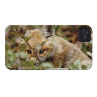 Kanada, Punkt Pelee Nationalpark. Junger roter iPhone 4 Case-Mate Hülle