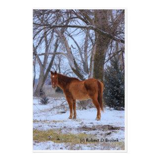 Kansas-Land-Pferd mit Schnee-und des Baums Foto