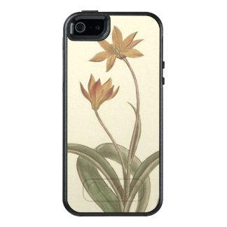 Kap-Tulpe-botanische Illustration OtterBox iPhone 5/5s/SE Hülle