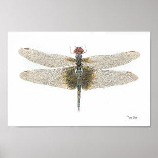 Kariertes Setwing Libellen-Aquarell Poster
