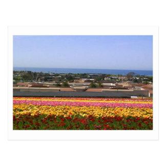 Karlsbad-Blume stellt Postkarte auf