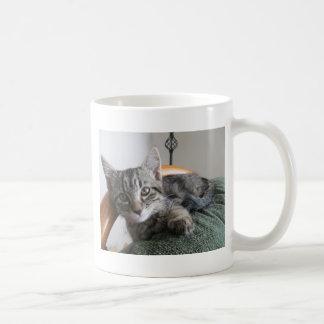 Kätzchen, das auf Stuhl sitzt Tasse