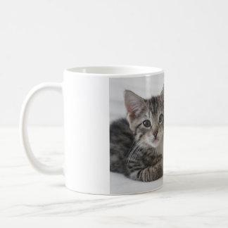 Kätzchen-Freunde für immer Kaffeetasse