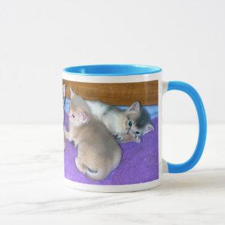 Kätzchen sechs Wochen-alte Abyssiniere Tasse