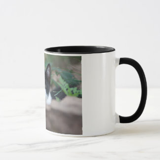 Kätzchen-Tasse Tasse