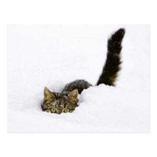 Katze, die im Schnee sich versteckt Postkarte