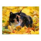 Katze Glückskatze tricolor schildpatt im Herbst Postkarte