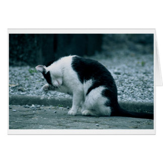 Katze - Kilkenny Irland Grußkarte