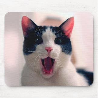 Katze meme - Katze lustig - lustige Katze memes - Mauspads