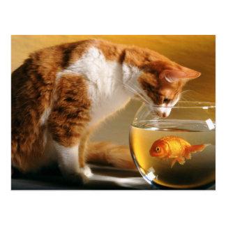 Katze und ein Goldfisch Postkarten