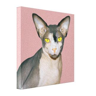 Katzen-Foto-Kunst der Leinwand-8x8 Sphynx Leinwanddruck