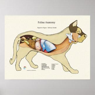 Katzen-internes verdauungsförderndes poster