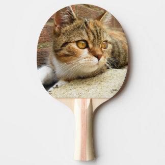 Katzen-Paddel Tischtennis Schläger