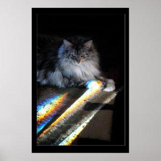 Katzen-Regenbogen-Brücken-Foto Poster