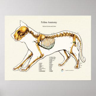 Katzen-skelettartiges gemeinsames poster