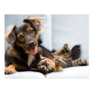 Katzen und Hunde - lustiger Hund - lustige Katzen Postkarte