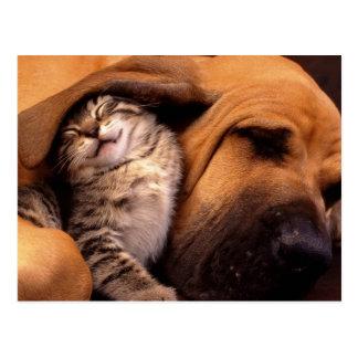 Katzen und Hunde Postkarten