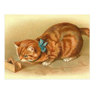 """""""Katzen-und Mäuse"""" Postkarte"""