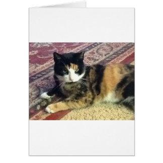 Katzen-Wandgemälde Grußkarte