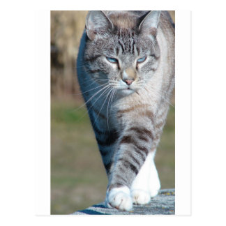 Katzen-Weg Postkarte