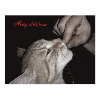 Katzenweihnachten Postkarte