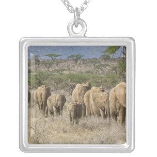 Kenia, Samburu nationale Reserve. Elefanten Versilberte Kette