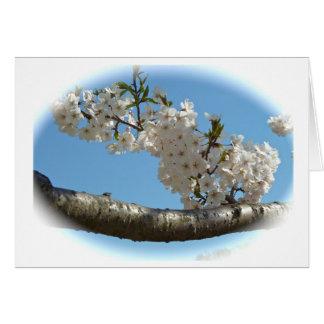 Kirschblüten 4 karte