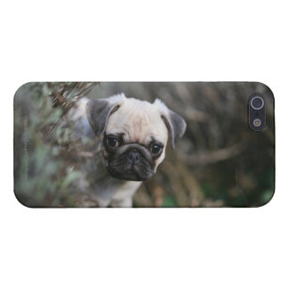 Kitz-Mops-WelpeHeadshot Schutzhülle Fürs iPhone 5