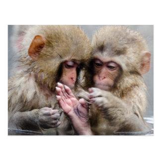 Kleine Affen in der heißen Quelle, Japan Postkarte