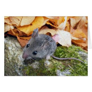 Kleine Feld-Maus #2 Karte