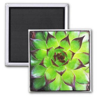 kleiner Succulent Quadratischer Magnet