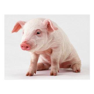 Kleines Schwein Postkarte