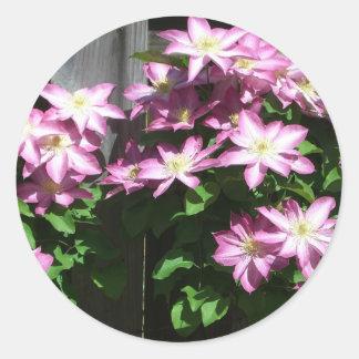 Kletternde Clematis-Frühlings-Blumen Runder Aufkleber