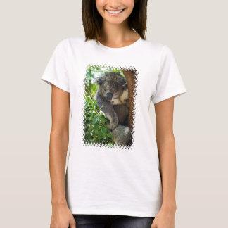 koala-34.jpg T-Shirt