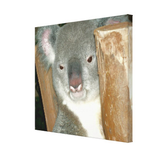 Koala-Bär Leinwand Druck