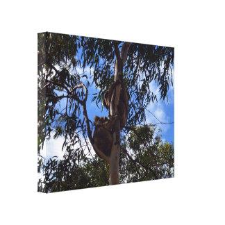 Koala_Bear_Duo, - Tree_Hugs_Large_Canvas_Picture. Gespannte Galerie Drucke