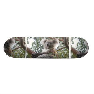 Koala-Skateboard Skateboardbrett